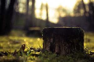 Should You Get Rid of a Tree Stump?